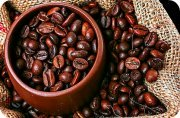 Uganda Coffee Safari