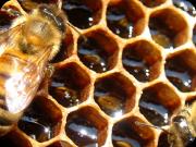 Uganda Honey