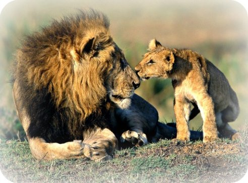 Uganda Wildlife Guide