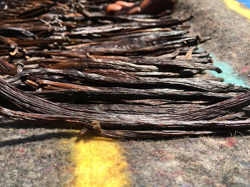 Top quality Uganda Vanilla Beans on a Blanket Curing from our 2018 Lot, the perfume is just irresistible