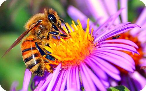 Uganda HoneyBee Keeping Guide