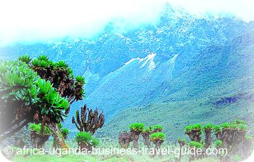 Ruwenzori Mountain National Park