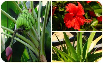 Uganda Plants Guide