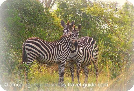 Uganda National Parks