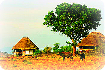 Uganda Tourist accommodation: Apoka Cottages