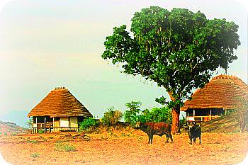 Uganda Tourist accommodation: Apoka Cottages