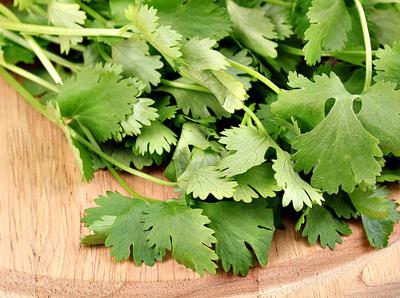 Fresh Parsley Leaves