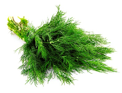 Harvested Dill Leaves