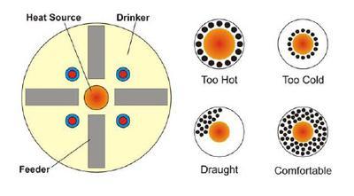 Regulating Heat in your Brooder