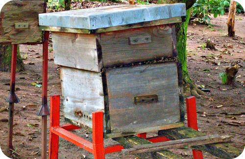 Langstroth Hive in Uganda
