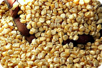Maize Grains in Uganda, Africa