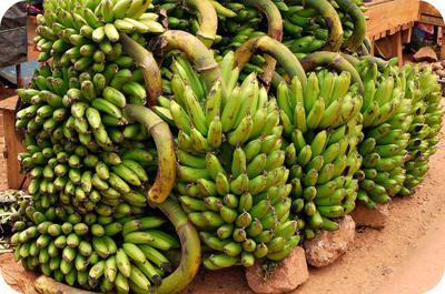 Matooke/Plantain in Uganda Market