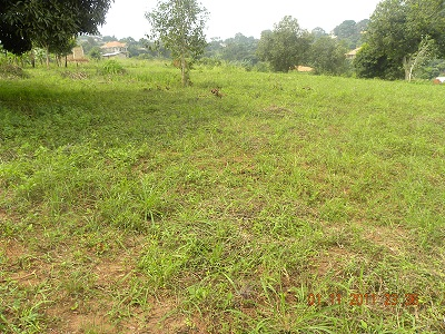 50 by 100 plot Bwebajja Uganda view 3