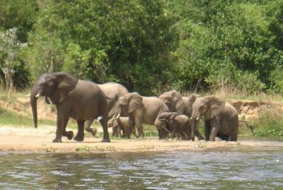The first thing we saw was a Elephant mother and her baby.
