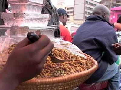 Uganda Insects Business Opportunities