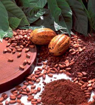 why are cocoa prices rising Cocoa production in ghana  is sold at fixed prices to the cocoa marketing board  the results of these measures were to be seen in rising cocoa production from.
