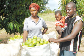Fruit Farmers in Uganda