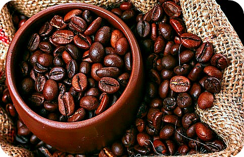 Uganda Coffee Tour