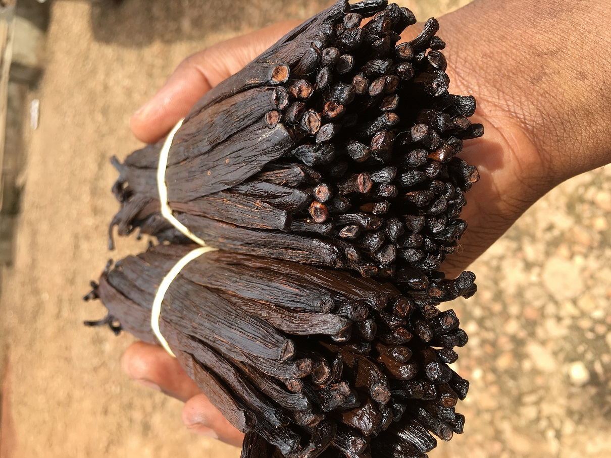 Grade A Uganda Vanilla Beans in my hand from our first season 2017 Vanilla Curing lot. You can be sure the scent is real strong from the beautiful dark oily skin.