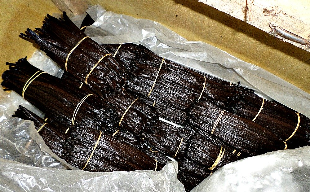 Cured Uganda Vanilla Beans in Conditioning Box wrapped in Wax Paper. We have found Wax Paper a Better alternative to Aluminum Foil paper.