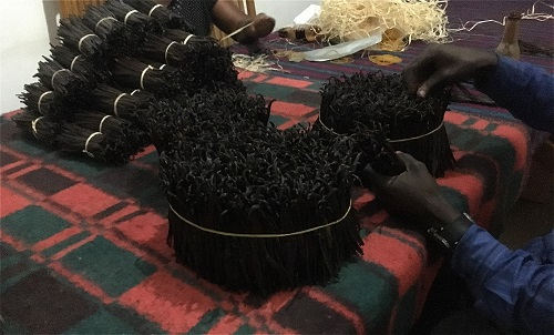 Sorting Uganda Vanilla Pods one Bean at a time.  You can be sure the scent is real strong from the beautiful dark oily skin.