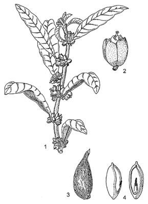 Fruit & Seed