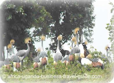 African Birding Safari