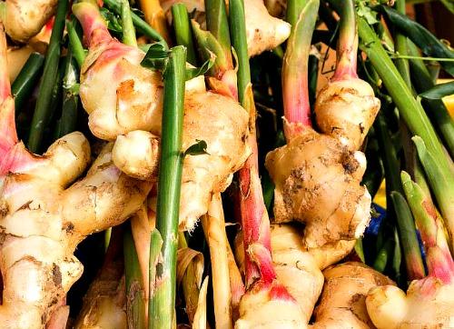 Ginger Rhizomes in Uganda