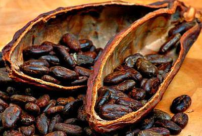 Dry Cocoa Beans in Dry Pods Uganda