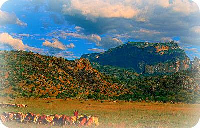 Kidepo Valley National Park Africa Uganda