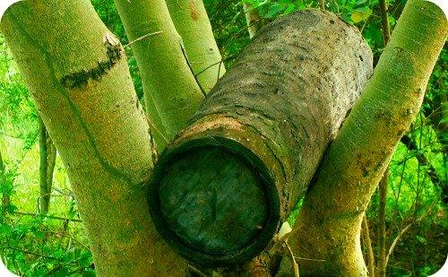 Log Beehive