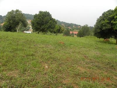 50 by 100 plot Bwebajja Uganda view 2