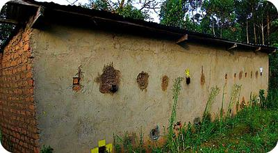 Honey Collection and Processing House in Africa , Uganda
